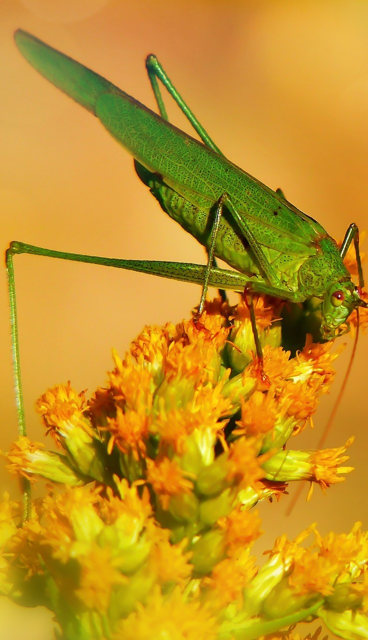A grasshopper on a flower.