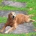 Celebramos el Día Mundial del Perro