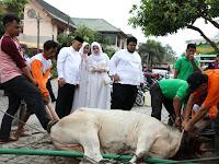 Wali Kota & Keluarga Kurban Di Masjid Amaliyah & Kelurahan Nelayan Indah
