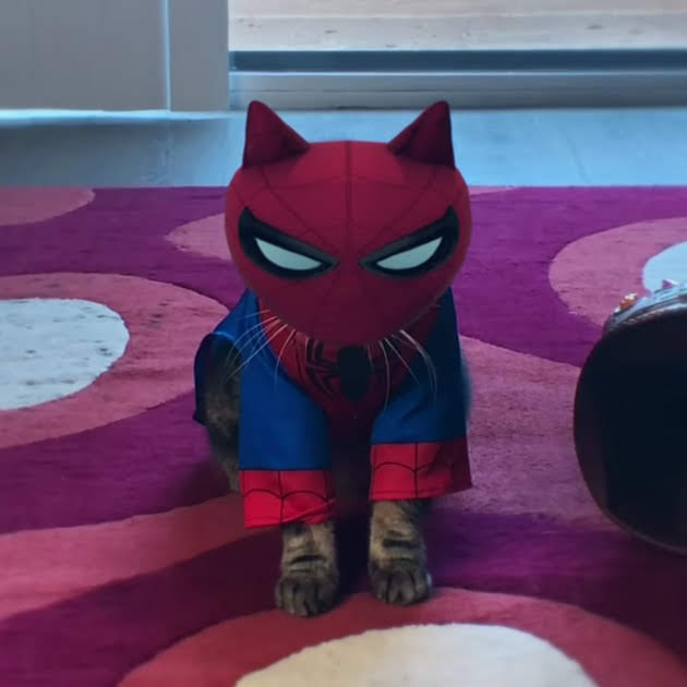 Avengers Cats : インフィニティ・ガントレットを手に入れた飼い主の野望を阻止するために、ネコのアベンジャーズが戦いを挑むパロディの愉快なアクション・ショート・フィルム ! !