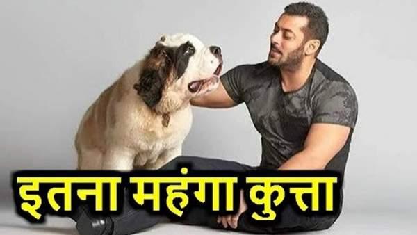salman khan dog price