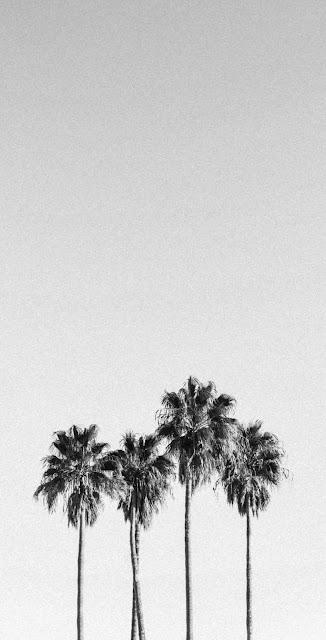 best black and white wallpaper 4k tree