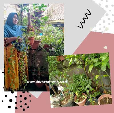Self Healing dengan Berkebun
