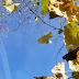 Dugoročna prognoza: Neće biti prave zime, proljeće toplije nego inače
