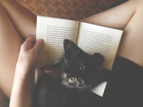 cb 5 - 10 Gatos pretos lendo livros