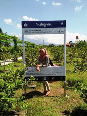 Agrowisata Kebun Jambu di Istana Jambu