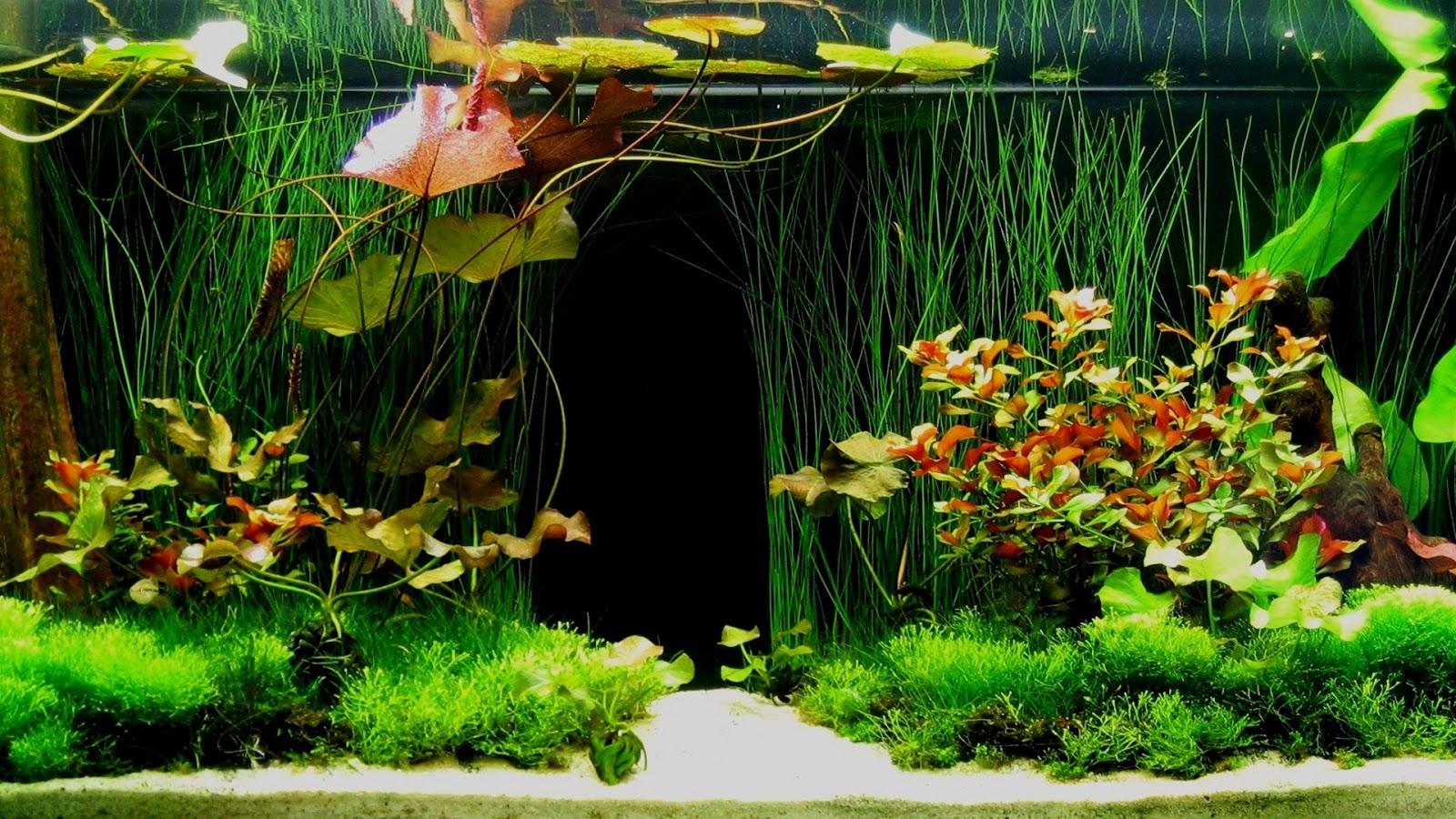 Fish Tank 3d Wallpaper Akvaryum Arka Plan Fon Resmi