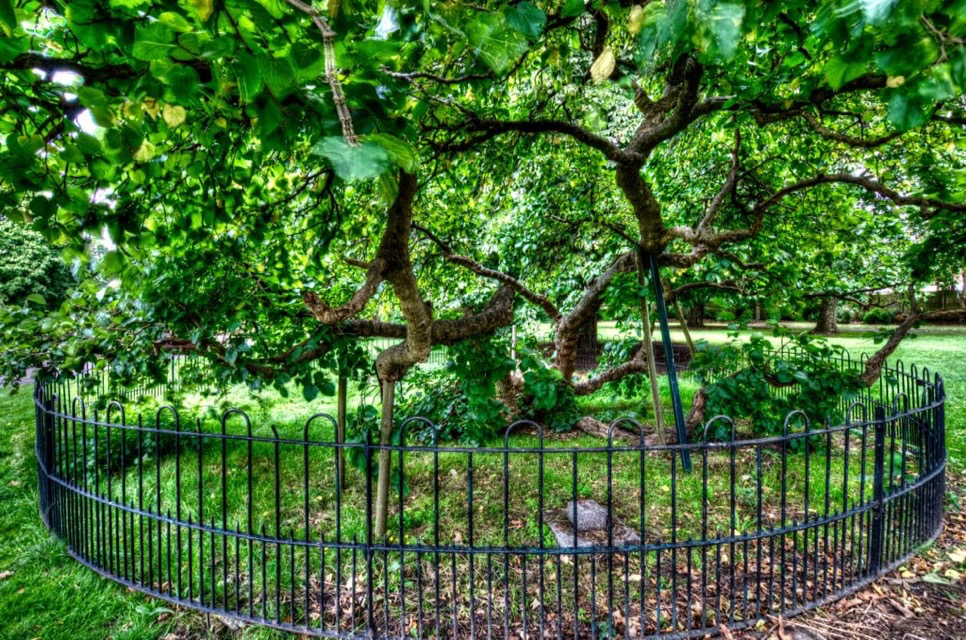Street Trees for Living - a project of Brockley Society: 2017