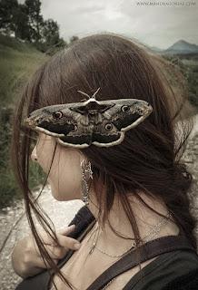 Saturnia Pyri Moth, Emperor Moth, Polilla Gran Pavón, Victoria Francés