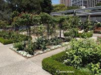 The rose garden - Royal Botanic Garden, Sydney, Australia