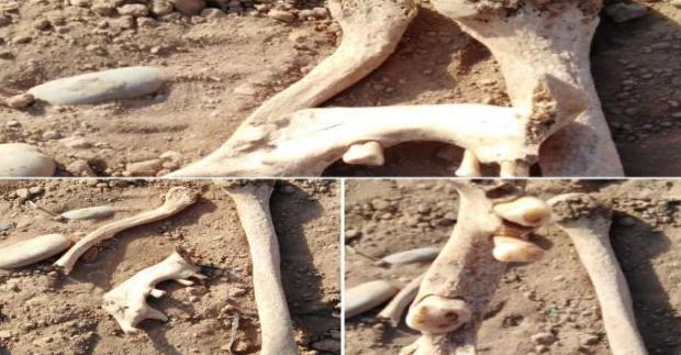تارودانت : انتهاك حرمة مقبرة قديمة بدوار أضوار جماعة مشروع العين