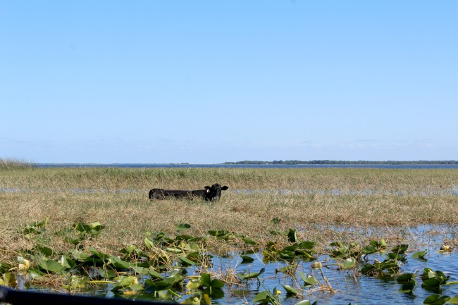 Swamp rides and gatorville: visiting Boggy Creek, Florida. Nourish ME: www.nourishmeblog.co.uk