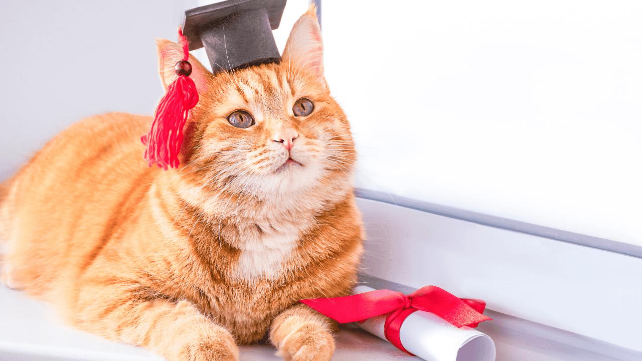 gato graduandose