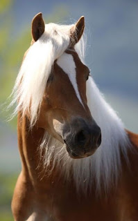 caballo-alazan-con-las-crin-blancas