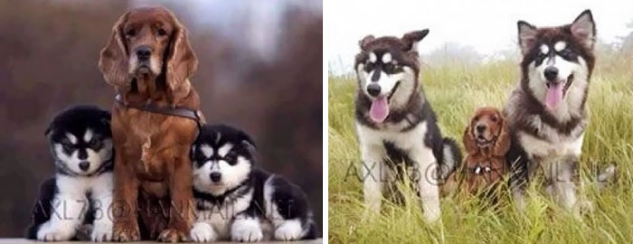 #3 Then And Now - 15 Before & After Pics Of Animals Growing Up Together