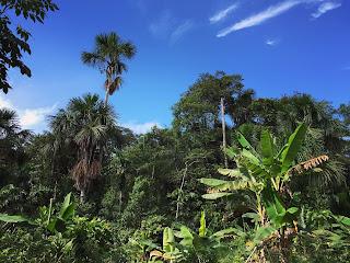 la foresta pluviale, definizione, caratteristiche e informazioni per la scuola