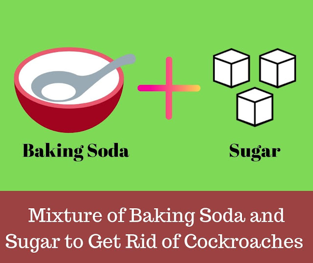 how to get rid of cockroaches with baking soda and sugar