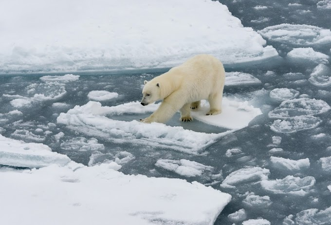 The Power Struggle In The Arctic Is Melting...