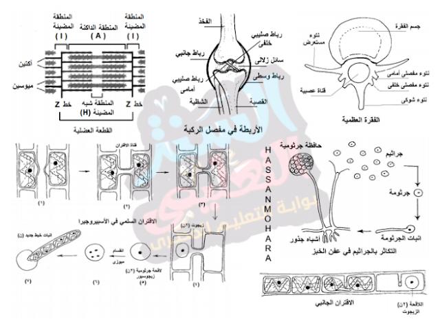 اهم رسومات الاحياء للصف الثالث الثانوى 2019 رسومات الاحياء pdf
