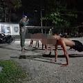 Tim URC Satpol Inhil Malam Tadi Berhasil Tertibkan Penyakit Masyarakat