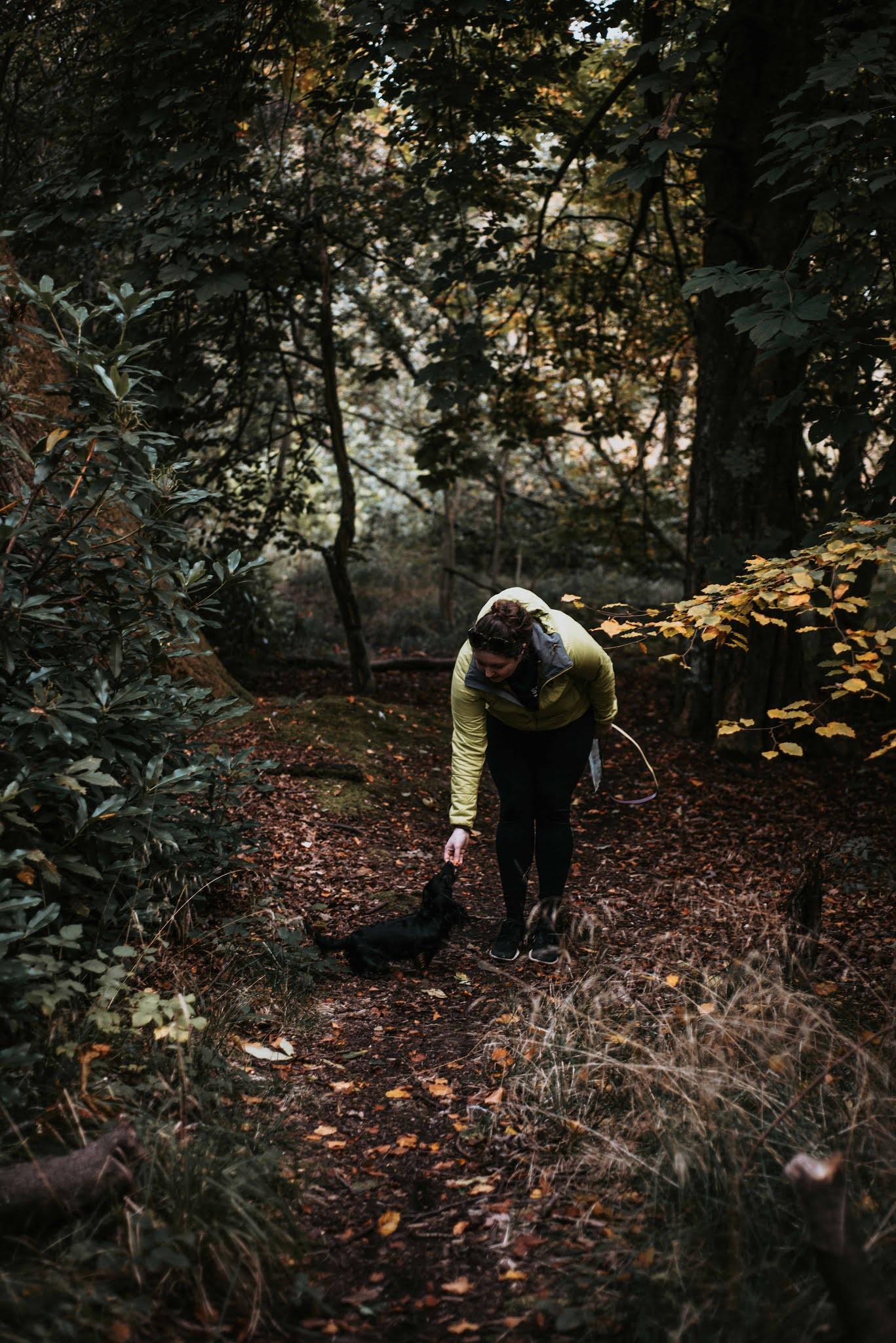 dachshund cocker spaniel in woods forest ferns liquid grain liquidgrain