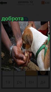 Собака питается прямо из человеческих рук, доброта человека
