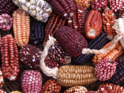 Maize in diets of people in coastal Peru dates to 5,000 years ago