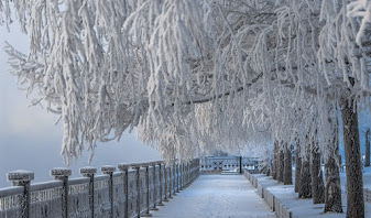 Snow and frost-covered trees in a park opposite a metal railing. Photo by Andrey May on Pixabay.