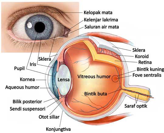 Gambar Bagian-bagian mata
