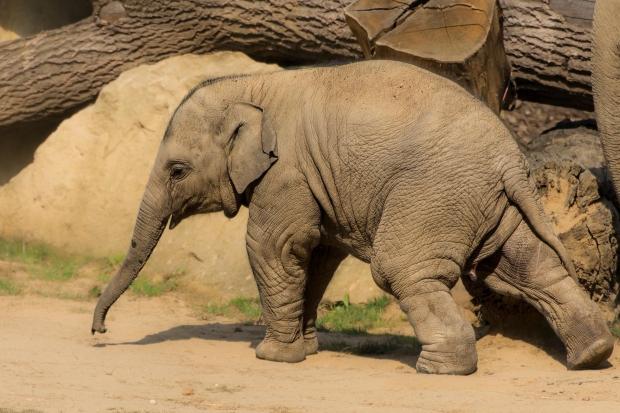 إليك قصة فيل فيها رسالة عن التفكير الكبير