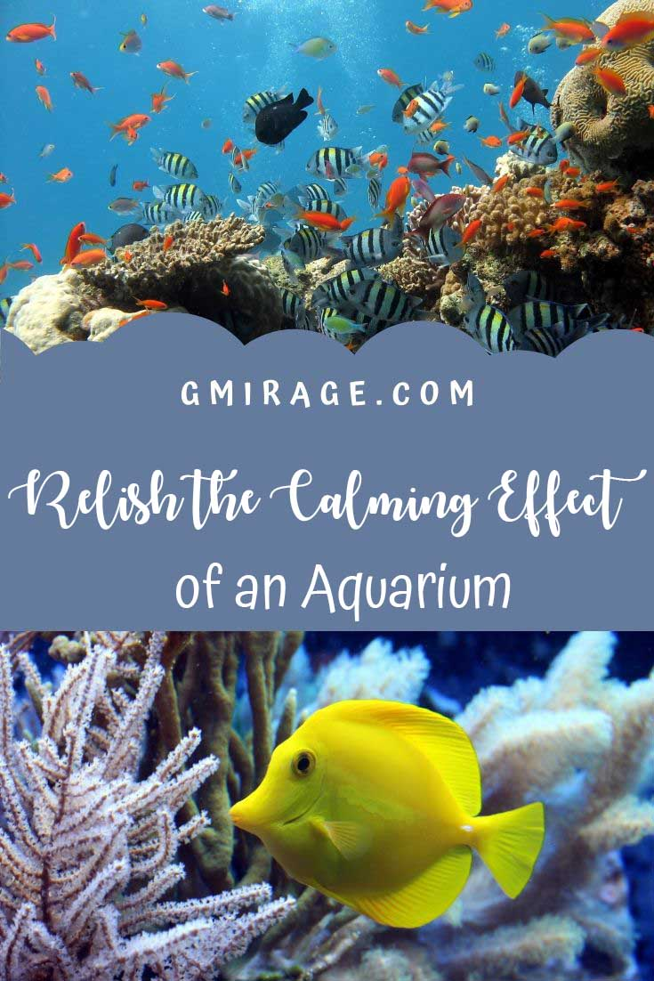 (Relish the Calming Effect of an Aquarium, aquarium, fish