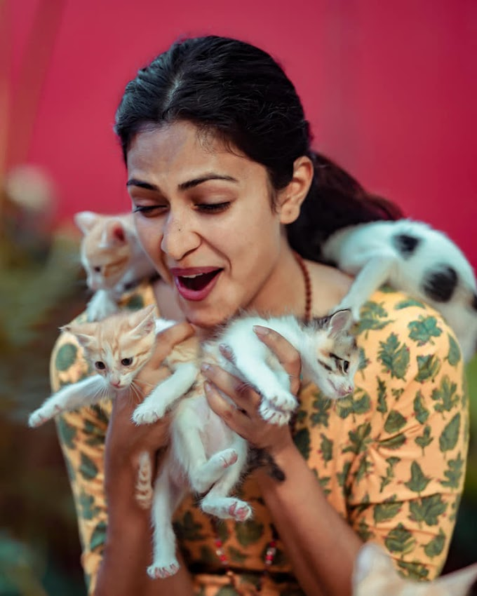 Recalls Childhood: Actress Amala Paul enjoying with a gang of kittens   Latest Pics