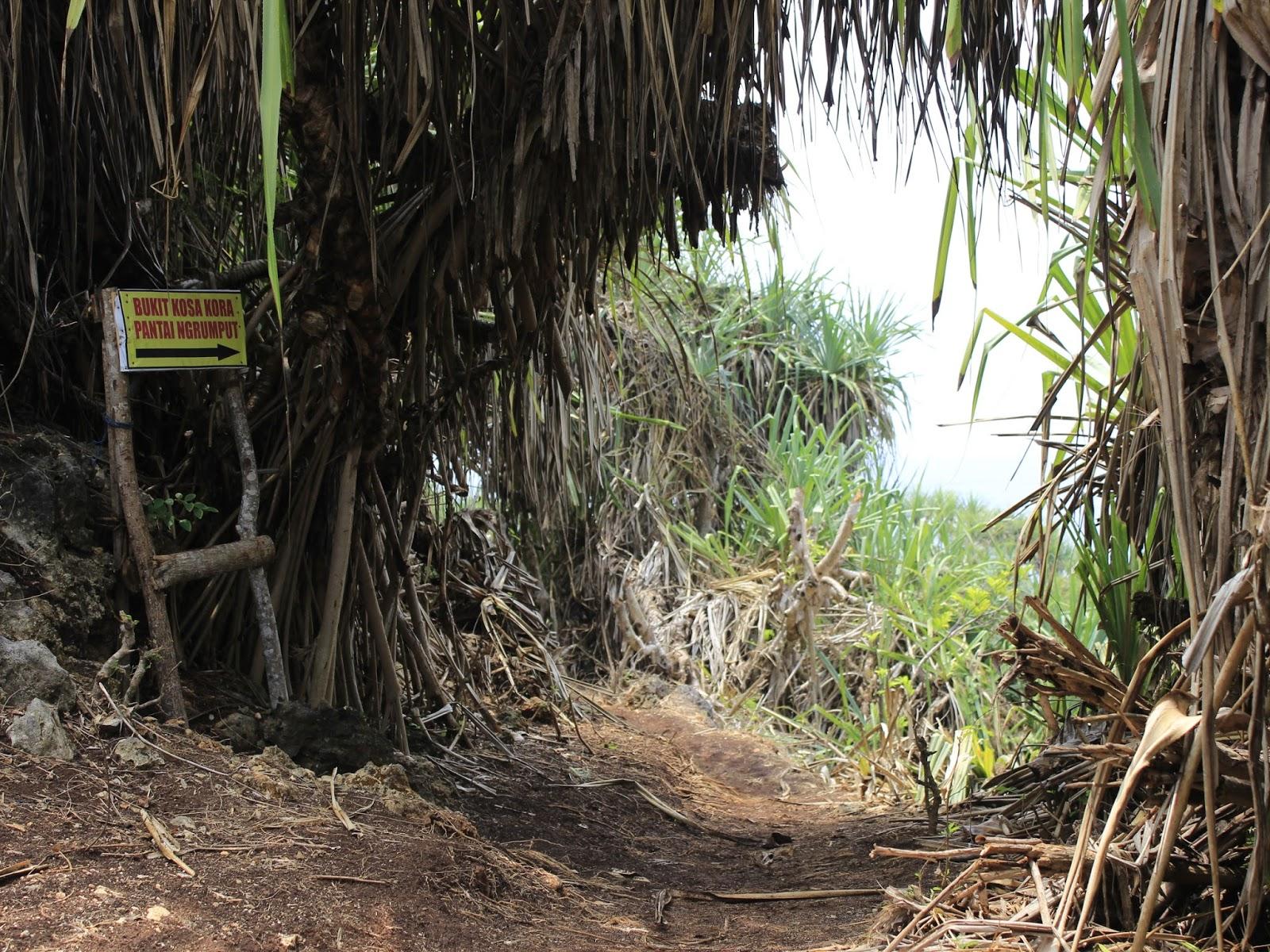 lorong pandan pantai ngrumput gunungkidul yogyakarta