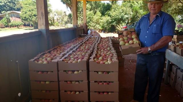 Roncador - Fruticultura garante renda adicional na agricultura familiar