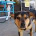 Perro ha esperado un mes afuera del hospital a que su dueño que falleció por COVID-19 salga