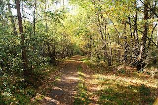 Ein gemütlicher, schmaler Weg führt durch den Wald.