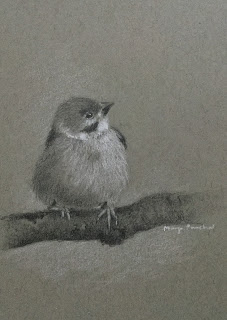 Graphite drawing of a sparrow on Strathmore gray toned paper