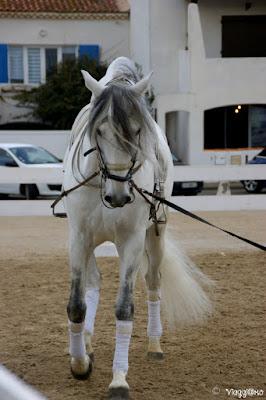 Spettacolo equestre in Place de Gitan