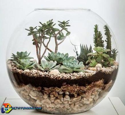 Plant Succulent in aquariums