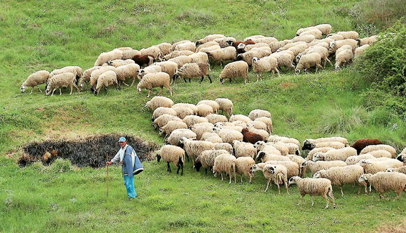 ΟΑΣΕ: Το Υπουργείο Αγροτικής Ανάπτυξης κοροϊδεύει τους κτηνοτρόφους