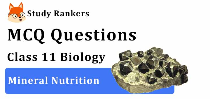 MCQ Questions for Class 11 Biology: Ch 12 Mineral Nutrition