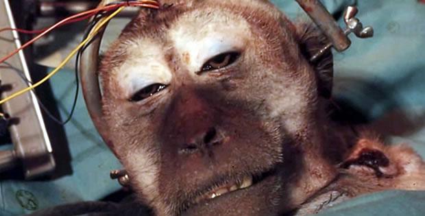 experimento transplante cabeca macaco - Os 6 experimentos mais bizarros do mundo