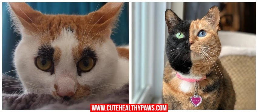 cats with their unique looks