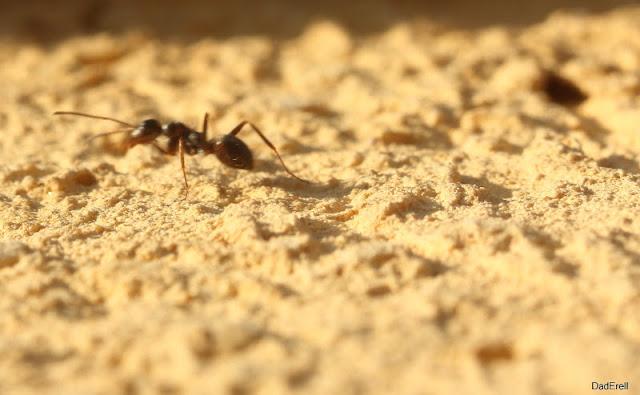Une fourmi sur un mur