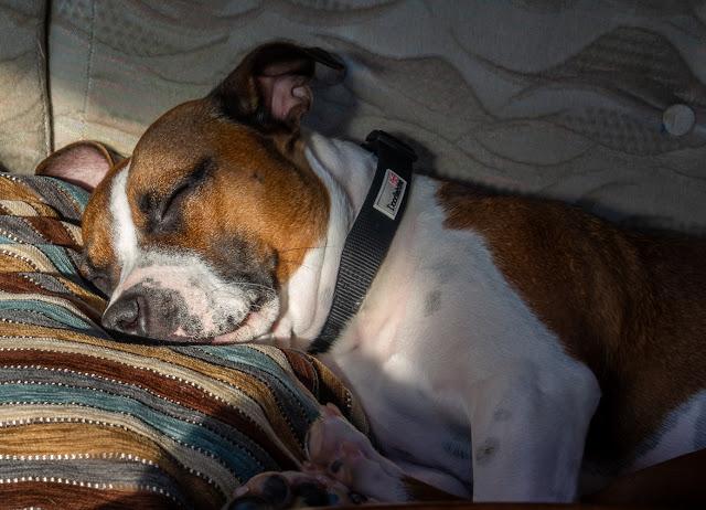 Photo of Ruby fast asleep