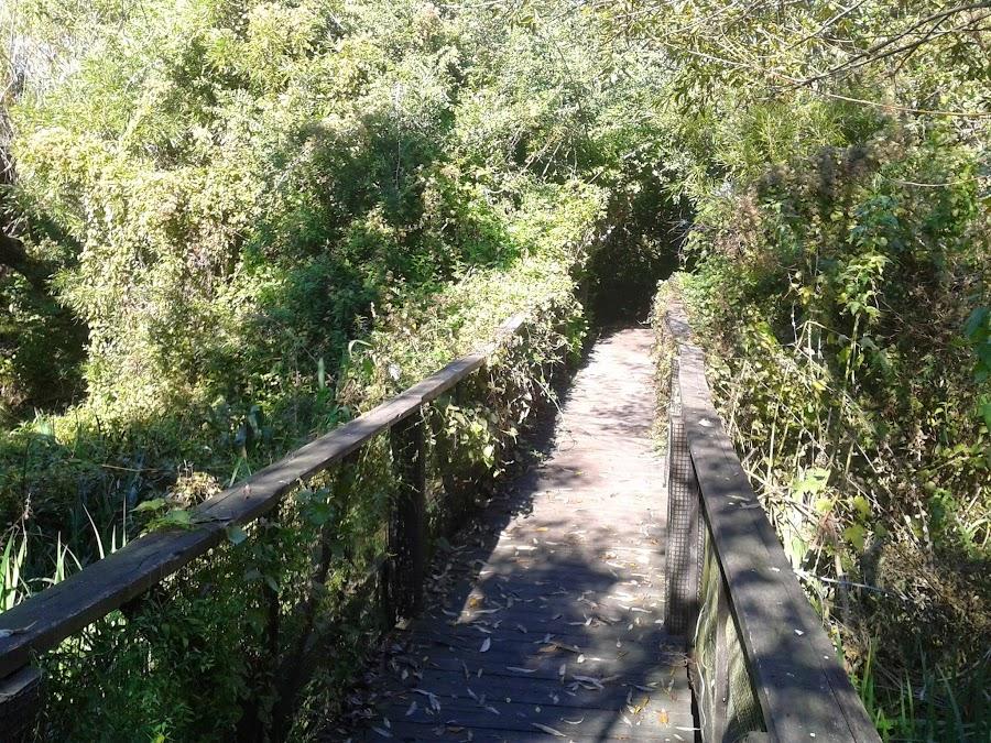 Reserva Ecologica de Vicente Lopez