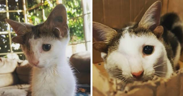 Котенок с четырьмя ушками и без глаза не верил, что кто-то его полюбит