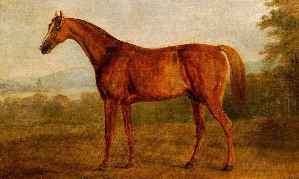 pot8os-horse