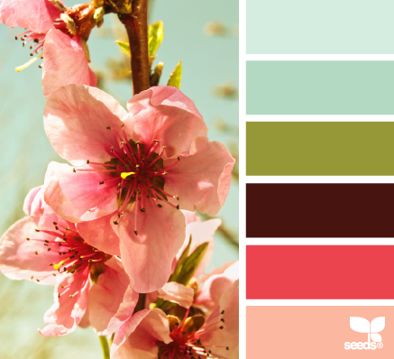 Design secret to use design seeds color palette for choosing your blog colors.