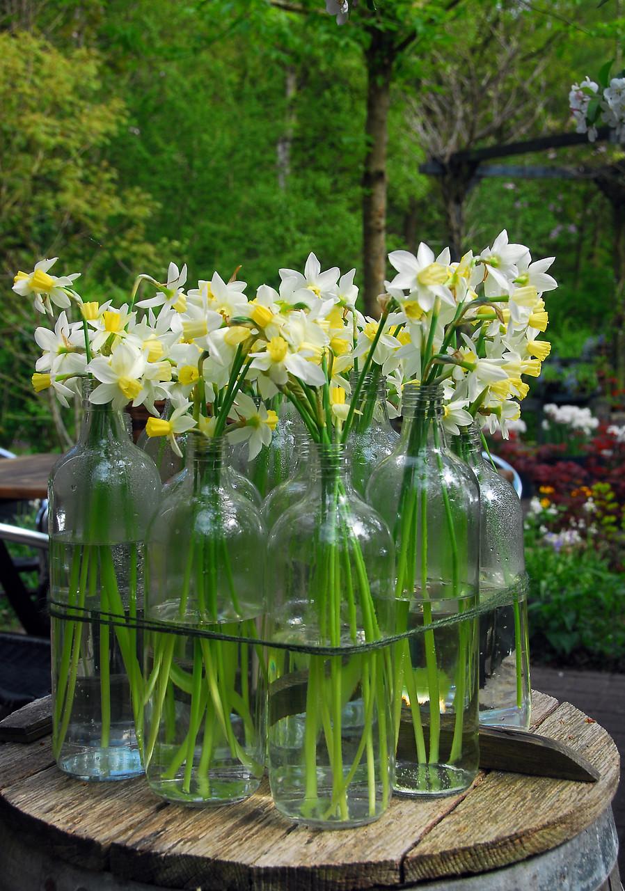 Flores de narciso en botellas de cristal